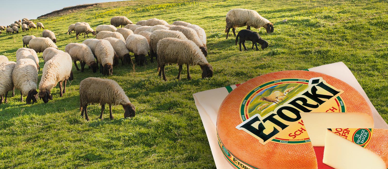Etorki Marke Schafsherde Käselaib