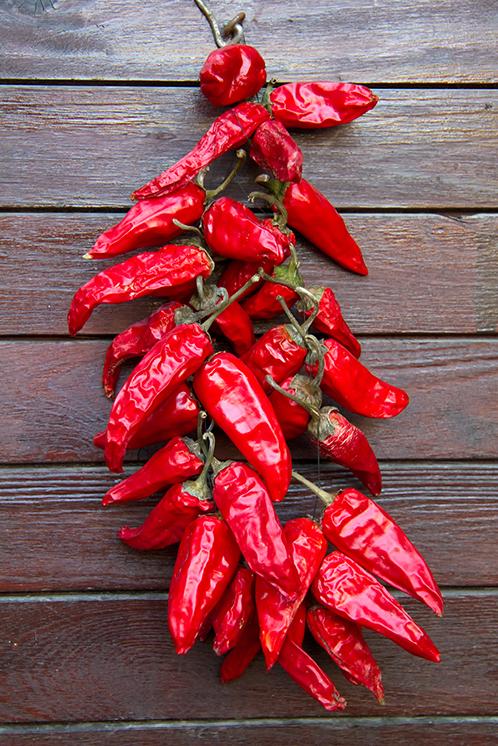 Rote Chilis sind ideal als scharfes Gewürz geeignet