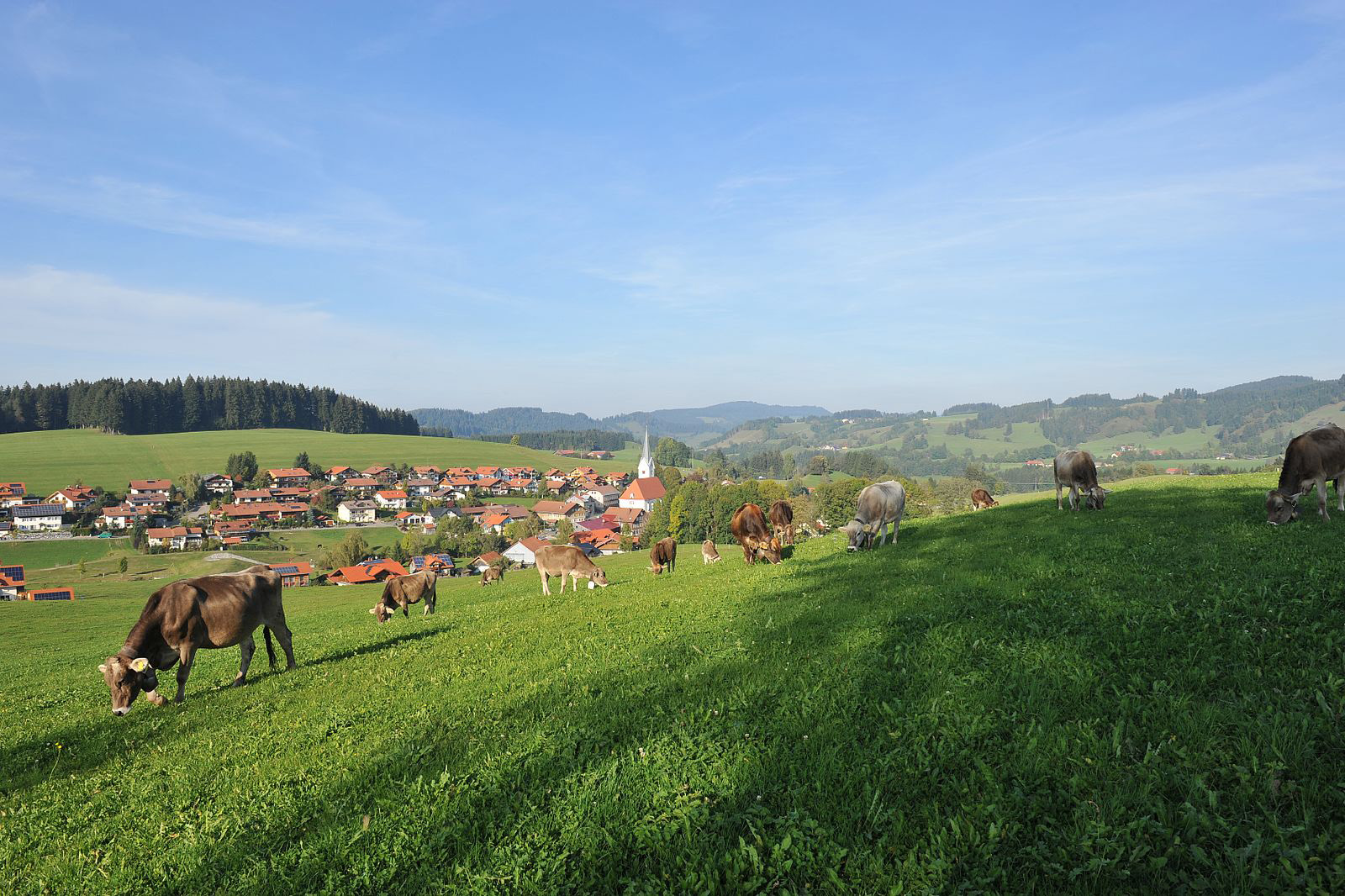 Milkana Kühe Wiese Landschaft Allgäu